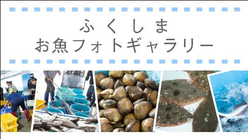 ふくしまお魚フォトギャラリー