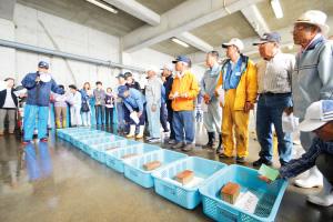 魚介類の入札風景